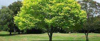 Дерево памяти